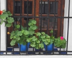 Pots of geraniums adorn village windows.